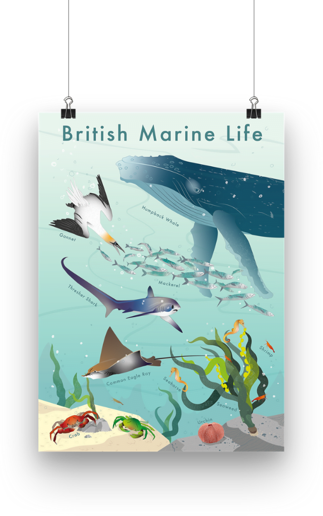 british marine conservation poster showcases a humpback whale, a gannet, a thresher shark, a common eagle ray, seahorse, shrimps and seaweed hanging from wires