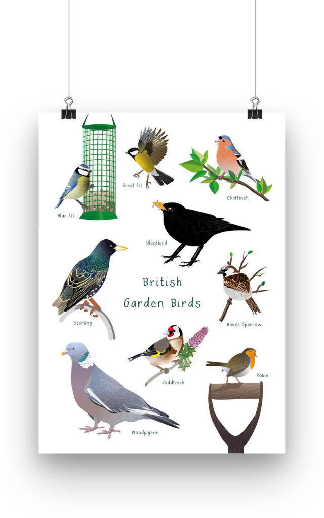 British Garden Birds are illustrated in a conservation poster with augmented reality. The poster shows a blue tit, a great tit, a chaffinch, a blackbird, starling, a house sparrow, a goldfinch, a robin and a woodpigeon