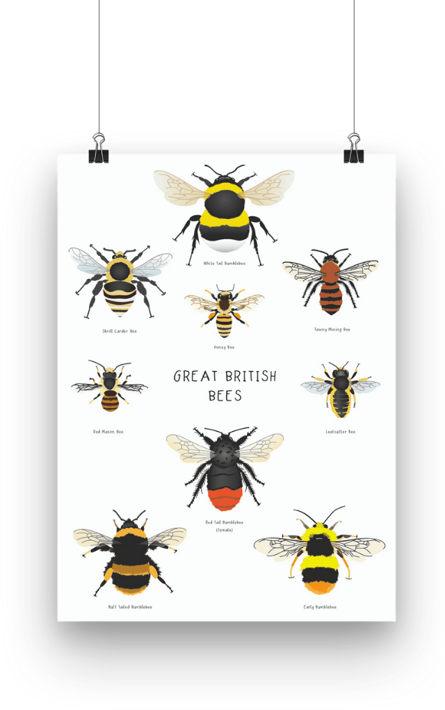 Great British bee poster hanging from wires, individually illustrated bees; white tail bumblebee, tawny mining bee, shrill carder bee, honey bee, red mason bee, leafcutter bee, red tail bumblebee, buff tailed bumblebee and an early bumblebee.