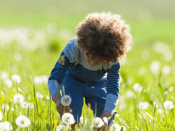 A boy with afro hair picks dandelions in a field.